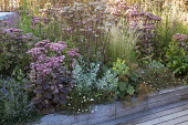 Roof terrace with built-in raised beds, hylotelephium syn. sedum and natural prairie planting