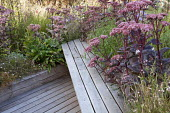 Decked roof terrace with built-in timber bench, hylotelephium syn. sedum, natural prairie planting in raised beds