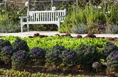 Cabbages 'Maribor' and salads in vegetable bed, bench