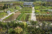 Overview of vegetable garden with greenhouse, pumpkins, bench