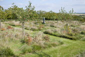 Orchard underplanted with meadow