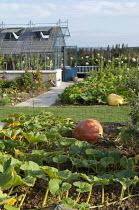 Overview of vegetable garden with greenhouse, pumpkins 'Atlantic Giant'
