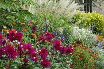 Dahlia 'Hillcrest Royal', Miscanthus sinensis 'Silberfeder', Helenium 'Moerheim Beauty', Helianthus 'Lemon Queen'