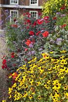 Verbena bonariensis, rudbeckia, dahlia, helianthus