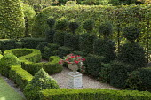 'The French Jury' clipped yew topiary shapes