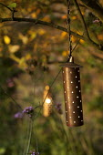 Electric Starliter copper lanterns in tree