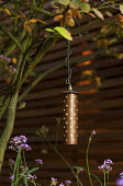 Electric Starliter copper lantern in amelanchier