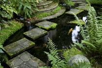 Stepping stones through pond, ferns