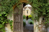 View through Gothic garden door to manor house, lavender, yew topiary, vine