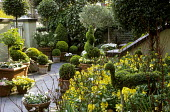 Front garden, topiary bird and spiral, wallflowers, paved front garden with containers, standard bay and olive trees
