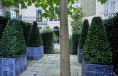Front garden, pyramidal yew topiary in lead containers, paved area with uplighters inset