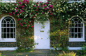 Roses over doorway