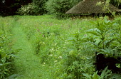 Mown grass path through meadow with long grass, thatched barn