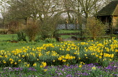 Daffodils and Crocus vernus, natural willow arch, summerhouse