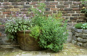Herbs in decorative container, sage, chives, thyme