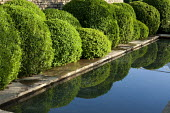 Cloud-pruned Buxus sempervirens surrounding formal rectangular pond, paved edge, reflection