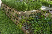 Dry-stone wall raised bed, Rosmarinus officinalis