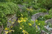 Terraced garden on steep slope, hemerocallis