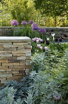 Donegal quartzite dry-stone wall, Allium rosenbachianum, Artemisia ludoviciana 'Valerie Finnis', Tulipa 'Black Hero'