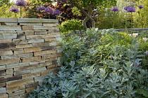 Donegal quartzite dry-stone wall, Allium rosenbachianum, Artemisia ludoviciana 'Valerie Finnis'
