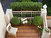 Overview of balcony, clipped box balls in containers, hydrangea