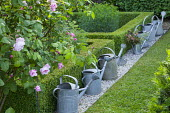 Watering cans by low clipped box hedges, Rosa 'Königin von Dänemark'