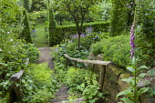 View down stone steps with Alchemilla mollis, clipped yew hedge