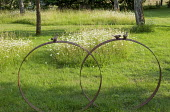 Metal hoop ornament in old orchard with Ox-eye daisies, long grass with mown path