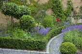 Gravel path with clipped box edging, Lavandula angustifolia 'Munstead', Potentilla thurberi 'Monarch's Velvet', standard bay trees, Geranium 'Brookside', Parthenocissus henryi