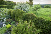 Cloud-pruned yew hedge, view to 'borrowed landscape'
