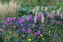 Dahlia 'Fascination', Calamagrostis x acutiflora 'Karl Foerster', Melianthus major, Verbena bonariensis, Tithonia rotundifolia 'Torch', Miscanthus nepalensis, achillea, Persicaria orientalis
