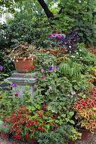 Exotic plants in containers, coleus, begonia, aeonium, zinnia