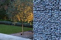 Stone gabion wall, uplit olive tree