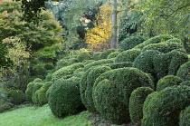Cloud-pruned box topiary