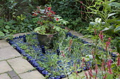 Blue glass mulch with edging of upturned blue glass bottles, Fuchsia 'Thalia' in container, Persicaria amplexicaulis