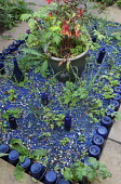 Blue glass mulch with edging of upturned blue glass bottles, Fuchsia 'Thalia' in container