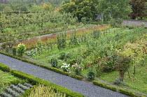 Rows of fruit in kitchen garden, grape vines, rasperberries, blackberries, trained apple and pear trees, dahlias
