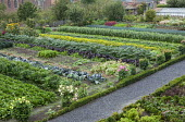 Rows of vegetables in walled potager, celeriac, broad beans, artichokes, cabbages, peppers, lettuces