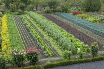 Rows of vegetables in kitchen garden, dahlias, kohlrabi, broad beans, lettuce, marigolds