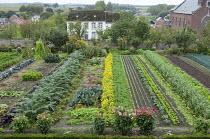 Rows of vegetables in kitchen garden, artichokes, dahlias, marigolds, kale, broad beans, kohlrabi, lettuces, cabbages