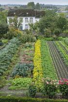 Rows of vegetables in kitchen garden, artichokes, dahlias, marigolds, kohlrabi, lettuces