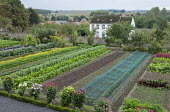 Rows of vegetables in kitchen garden, dahlias, broad beans, Swiss chard, netting over newly planted seedlings, lettuces, peppers, Kohn rabi, artichokes, marigolds