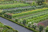 Rows of vegetables in kitchen garden, artichokes, dahlias, peppers, broad beans, marigolds, Kohlrabi, cabbages