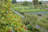 View to kitchen garden with rows of vegetables, rosehips, peach tree