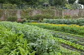 Broad beans, lettuces, marigolds, artichokes and kohlrabi planted in rows in kitchen garden
