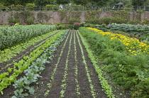 Rows of broad beans, lettuces, kohlrabi, carrots, marigolds, artichokes in kitchen garden