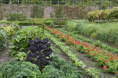Kale and Brassica oleracea (Curly kale), Swiss chard, rows of dahlias, strawberries, asparagus, grape vine, peppers
