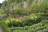Rows of apple trees and strawberries, dahlias in cutting garden