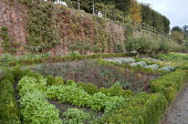 Box-edged herb parterre, grape vine and espaliered pear trees on wall