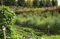 Grape vine, asparagus bed, wildlife 'hotels'